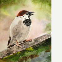 House sparrow, signed original painting