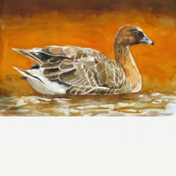 Pink footed goose. Original watercolour.