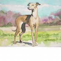Italian Greyhound. Signed, original watercolour painting
