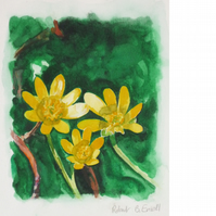 Celandine. Signed, original watercolour.