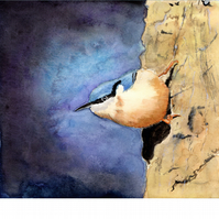 Young Nuthatch. Original watercolour painting, signed by the artist.