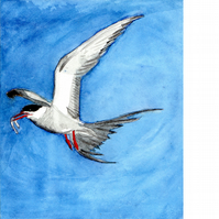 Arctic tern. Signed, original watercolour painting.