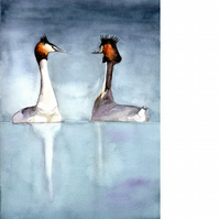 Great Crested Grebes. Original watercolour painting.