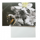 Eco Friendly Greeting Card — Bumble Bee & Blackberry Flower — Lake District