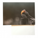 Eco Friendly Greeting Card — Robin — Lake District Nature