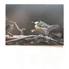 Eco Friendly Greeting Card — Great Tit — Lake District Nature