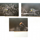 Pack of 3 bird Eco Friendly Greeting Cards — Blue Tit, Great Tit & Robin