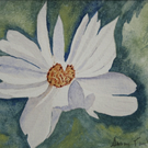 SMALL WATERCOLOUR PAINTING WITH MOUNT OF WHITE FLOWER 8 X 6 INCHES IMPRESSIONIST