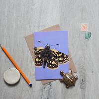Chequered Skipper Butterfly Card