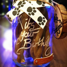 Personalised Dogs Treats Jar Gift, Hand Crafted in Scotland