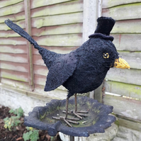 Mr Blackbird in velvet top hat