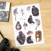 Primate Mothers Wildlife A4 Illustration Print
