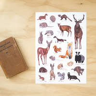 British Wildlife A4 Illustration Print