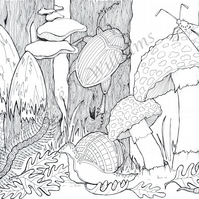 Forest Floor Colouring Page