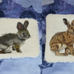 Rabbit and Hare Eco Face wipe Set