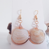 SALE Natural Shell Earrings with Gold Edging
