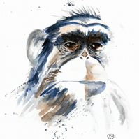Chimp with attitude. Original watercolour painting