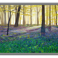 Bluebell Wood  -  Print