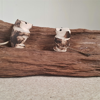 Wood mice on Oak Branch2