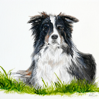 Collie dog, mounted print