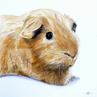 'Goldie', mounted print