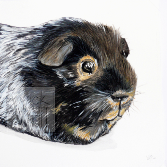 'Gertie' Guinea pig, mounted print