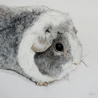 'Pepper' Guinea pig, mounted print
