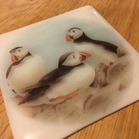 Puffins Printed Glass Coaster