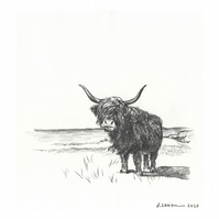 'Highland cow 2' - Original Graphite Drawing - 14x15 cm Pencil on Paper