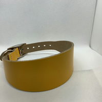 Yellow leather collar for greyhound or whippet