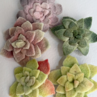 Felt succulent brooches set of five CLEARANCE!