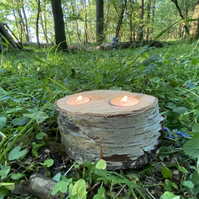 Natural dried Birch Candle holder