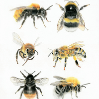 A4 British Bees Limited edition fine art Giclée print.