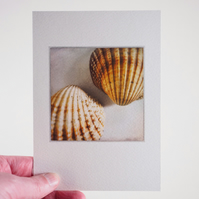 Sea shells – fine art photography, still life photograph, visual art