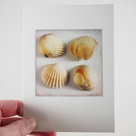 Sea shells III – fine art photography, still life photograph, visual art