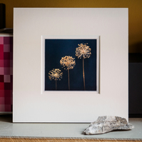 Three allium seedheads – fine art photography, flower photography, visual art