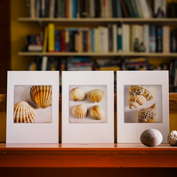 3 sea shell prints – fine art photography, still life photograph, visual art