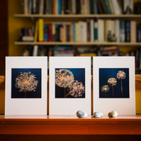 3 allium seedhead prints – fine art photography, flower photography, visual art