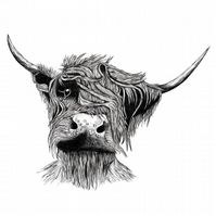 Highland Cow Print - Signed and Mounted