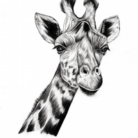 Giraffe Print - Signed and Mounted