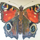 Peacock butterfly watercolour painting