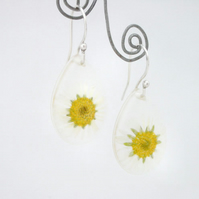 Daisies in resin and sterling silver earrings