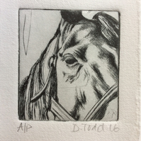 'Horse' original Hand Pulled Print by Debbie Todd