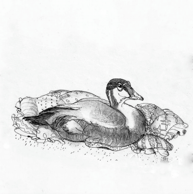 """Eiderdown ""- Digital Print of Original Monotype - Eider Duck"