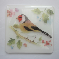 Handmade fused glass coaster - Goldfinch (a)