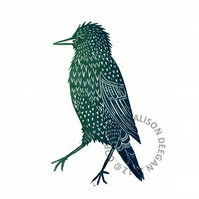 Original lino cut print Mister Starling