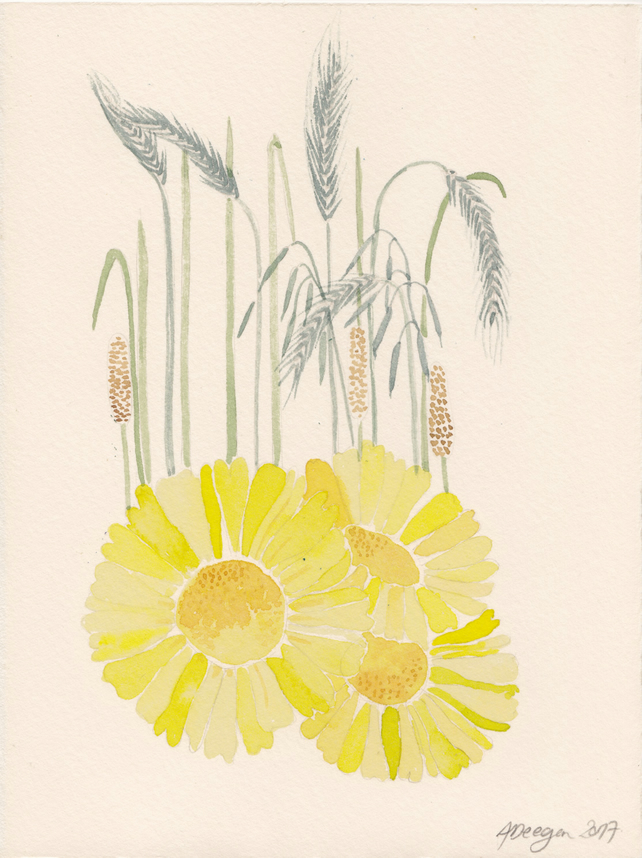 Balranald Corn Marigold - watercolour painting
