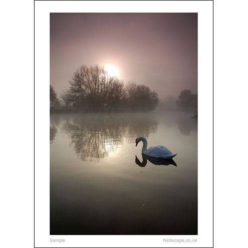 Avon Swan, Mounted Photographic Print