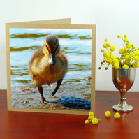 Greetings card - 'March of the Mallard duckling'