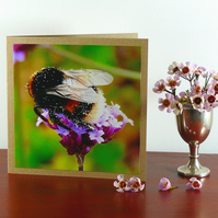 Greetings card - 'Buff-Tailed bumblebee gathering pollen'